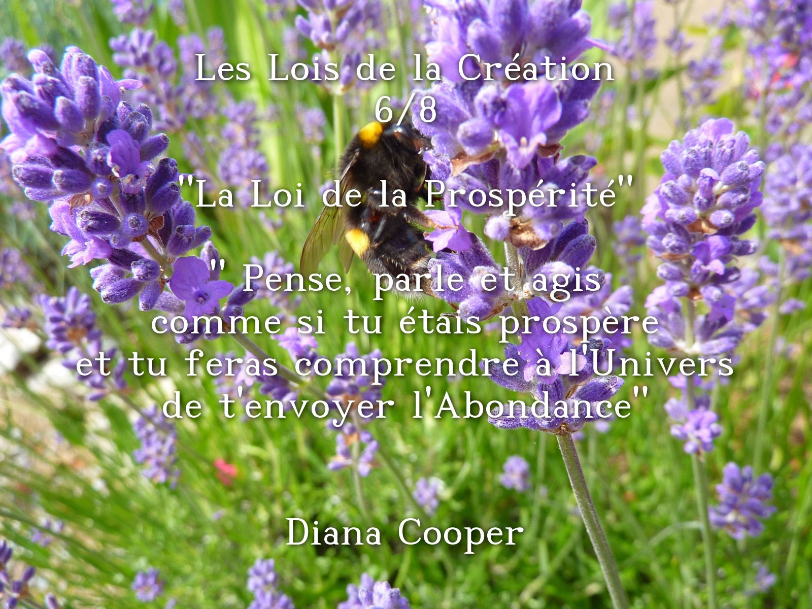 wp-Les-Lois-de-la-Cr-ation-6-8-La-Loi-de-la_1537861448
