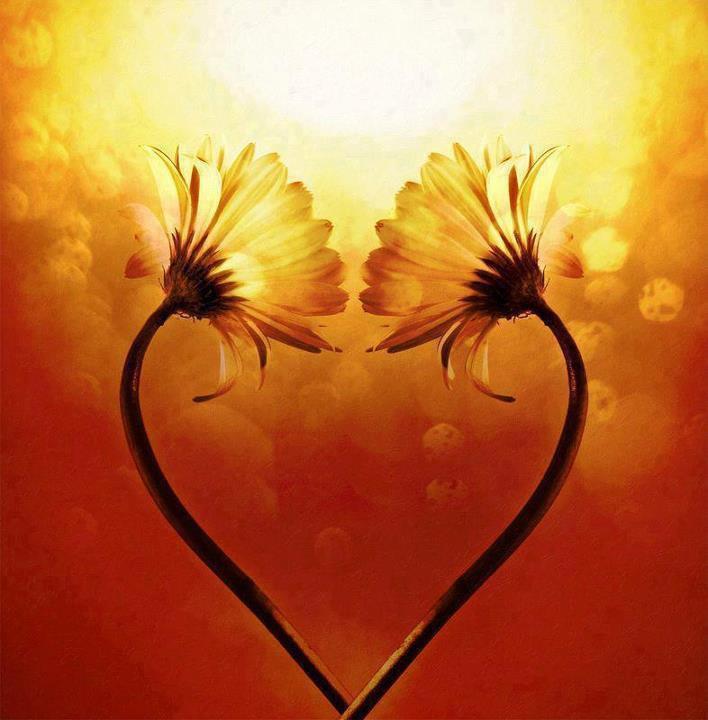 Extrait du livre : «Vivre l'amour» — Qui êtes-vous ? Méditation & Éveil.