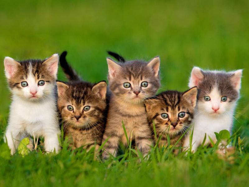 Métatron – La véritable nature consciente et les innombrables bienfaits des chiens et des chats – Août 2016