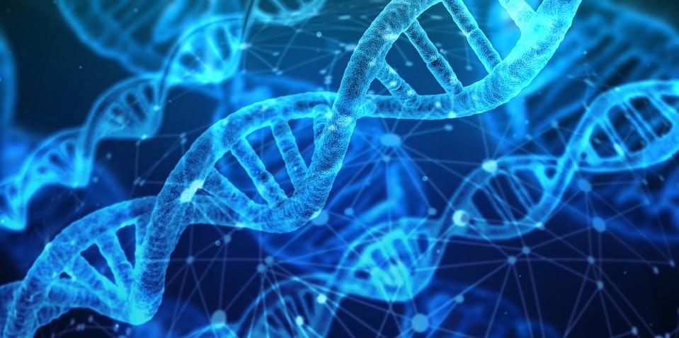 Preuve de changements dans notre ADN (Dr Berrenda Fox) : des nouveaux brins d'ADN apparaissent !