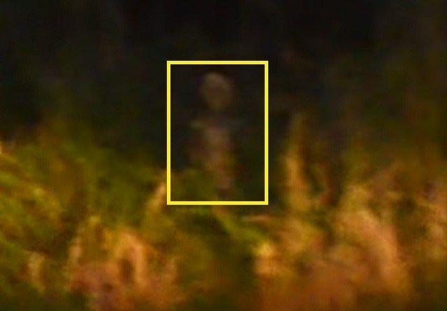 L'incroyable entité ressemblant à un extraterrestre filmé près d'une route…
