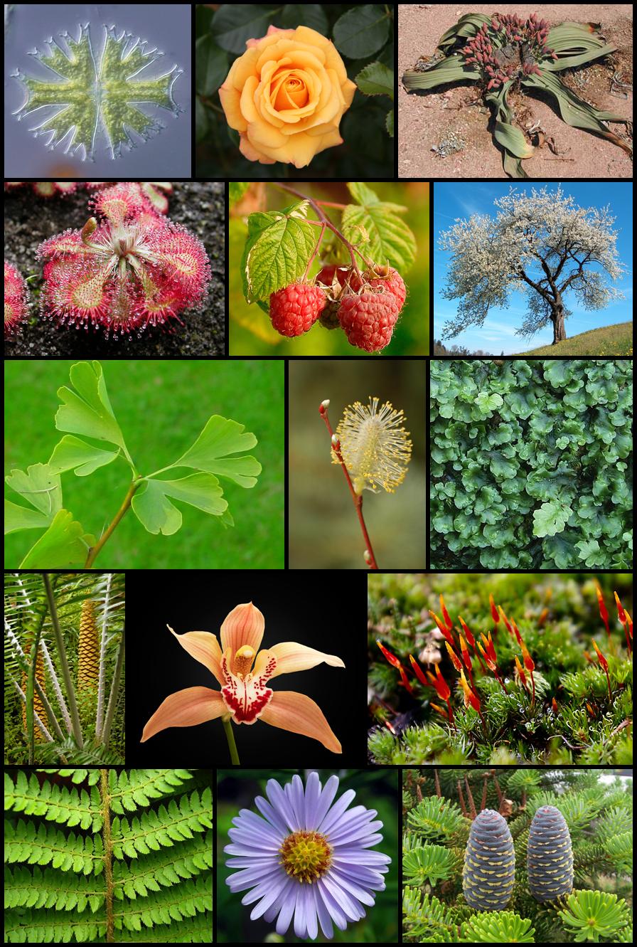 Diversity_of_plants_image_version_5