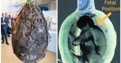 La fin des cercueils : Des capsules biologiques transforment nos corps en arbres