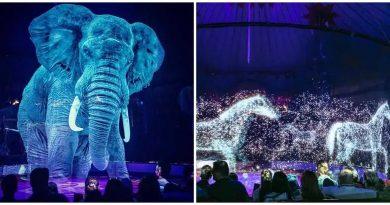 Un cirque allemand utilise des hologrammes au lieu d'animaux vivants pour une expérience magique sans cruauté