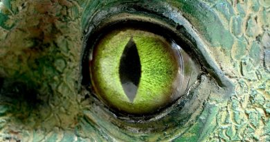 Reptiloïde et Clone – Conscience collective des Clones