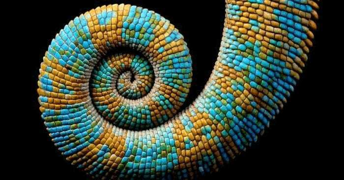 SacredGeometry-Spiral