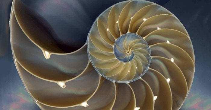 SacredGeometry-nautilus