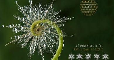 La géométrie sacrée est-elle une clé pour l'illumination ?